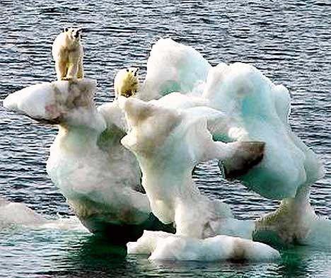 """""""You mean there's a block of ice the size of California? Why don't we just go there, guys?"""
