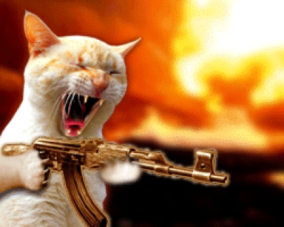 mare_machine_gun_cat.jpg